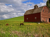 A Ride Through the Farm Country of Palouse  Washington State  USA