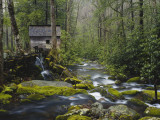 Watermill By Stream in Forest  Roaring Fork  Great Smoky Mountains National Park  Tennessee  USA