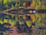 Shoreline Reflection  Lily Pond  White Mountain National Forest  New Hampshire  USA