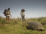 Galapagos Giant Tortoise With Tui De Roy Near Alcedo Volcano  Isabela Island  Galapagos Islands