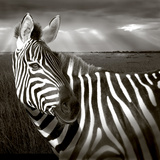 Black &amp; White of Zebra and Plain  Kenya