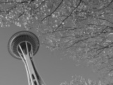 Space Needle  Seattle  Washington  USA