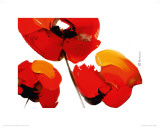 Three Poppies (white)