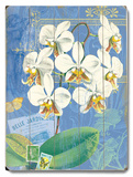 Natural Wonders-White Orchid