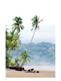 Costa Rica Palms