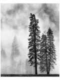 Yosemite Misty Pines Black and White
