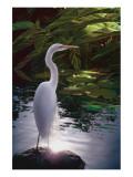 Egret Light