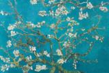 Almond Blossom  San Remy  1890