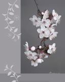 Plumtree Flowers