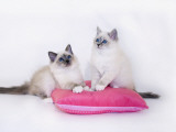 Birman