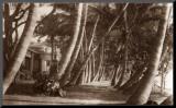 Coconut Lane  Waikiki  Hawaii  1916