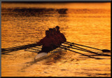 Teamwork: Rowers