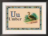 Umber