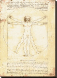 Vitruvian Man  c1492