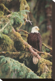 Silent Sentinel Alaska