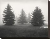 Tree  Study  no 6