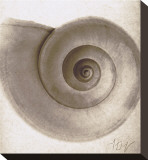 Snail Shell
