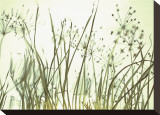 Watery Grasses III
