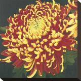 Chrysanthemum  no 1