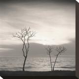 Tree  Study  no 4