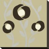 Fiori Olive