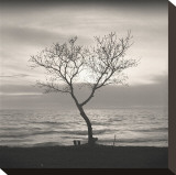 Tree  Study  no 5