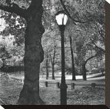 Light in Central Park