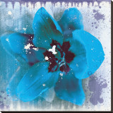 Tulip Fresco (blue)