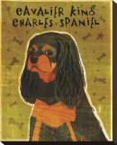 Cavalier King Charles (black and tan)