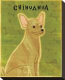 Chihuahua (tan)