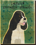 English Springer Spaniel (black and white)