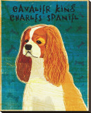 Cavalier King Charles (blenheim)
