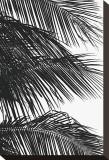 Palms  no 4