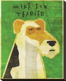Wire Fox Terrier