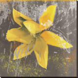 Tulip Fresco (yellow)