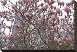 Springtime in New York