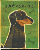 Dachshund