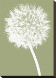 Dandelion (khaki)