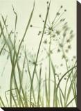 Watery Grasses II