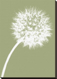 Dandelion Tilt (khaki)