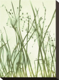 Watery Grasses I
