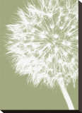 Dandelion Crop (khaki)