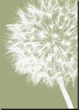 Dandelion Crop (khaki)
