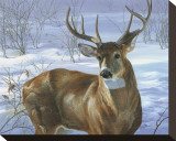 Through My Window: Whitetail Deer