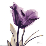 Royal Purple Parrot Tulip Reproduction d'art par Albert Koetsier