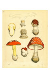 Mushrooms 1855 43