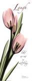 Pink Tulip  Love
