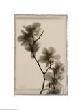 Magnolia Polaroid