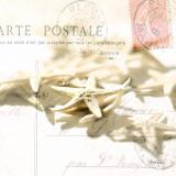 Postal Shells II