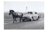 Pony Pulling Volkswagon  France